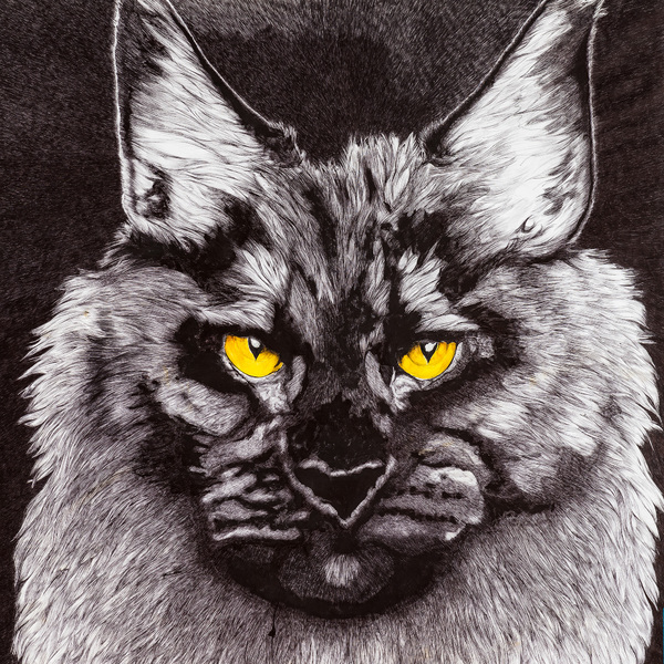 The cats  , bic noir
